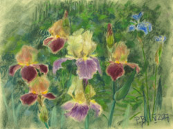Irises 2. 2017. Pastel on paper. 40 x 30 cm.