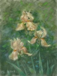 Irises. 2017. Pastel on paper. 30 x 40 cm.
