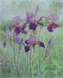 Irises. 2006. Pastel on paper. 41 x 50 cm. Private collection.